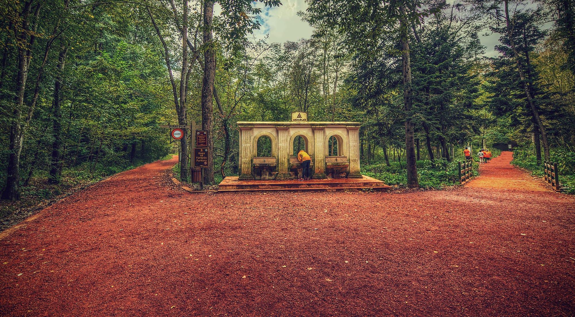 صور غابات بلغرد