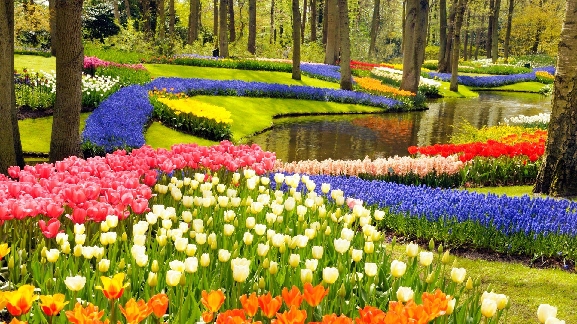 حدائق زهرة التوليب